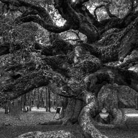 Kathleen Struckle - Angel Oak Tree 2