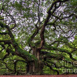 Douglas Stucky - Angel Oak Tree