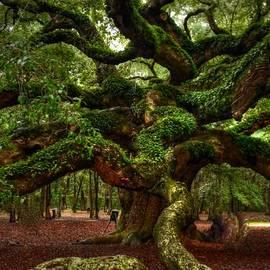 Kathleen Struckle - Angel Oak Tree
