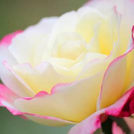 The Art Of Marilyn Ridoutt-Greene - Angel of Roses