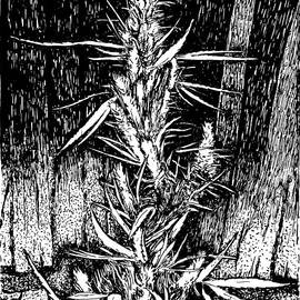 Joseph Juvenal - Angular Plant