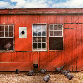 Mike Savad - Animal - Bird - Bird watching