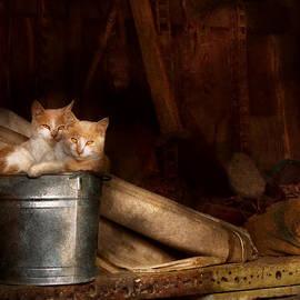 Mike Savad - Animal - Cat - Bucket of fun
