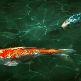 Mike Savad - Animal - Fish - Koi - Another fish story