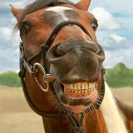 Mike Savad - Animal - Horse - I finally got my braces off