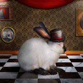 Mike Savad - Animal - The Rabbit