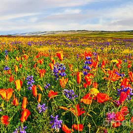 Bob and Nadine Johnston - Antelope Valley California Poppy Reserve