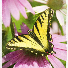 Christina Rollo - Antique Butterfly Postcard No. 3022
