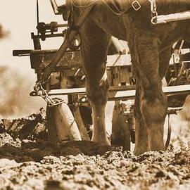 Dan Sproul - Antique Plowing Work Horses