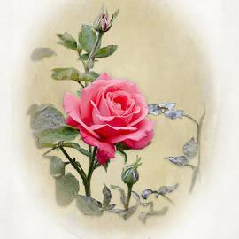 AGeekonaBike Photography - Antique Rose II