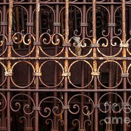 Georgia Sheron - Antique Wrought Iron Fence