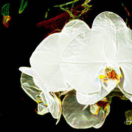 Janis Lee Colon - AOS White Orchid 1