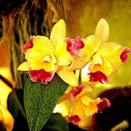 Janis Lee Colon - AOS Yellow Orchid 1