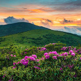 Dave Allen - North Carolina Appalachian Trail Roan Mountain Highlands