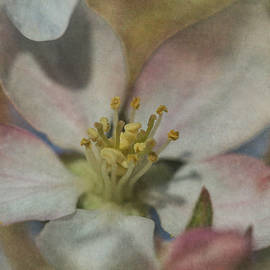 Angie Vogel - Apple Blossom 2
