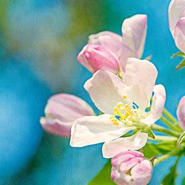 Alexander Senin - Apple Blossom
