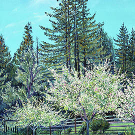 Asha Carolyn Young - Apple Blossoms and Redwoods