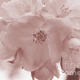 Luv Photography - Apple blossoms macro in sepia