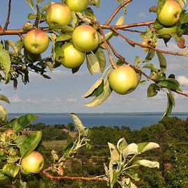 Diane Lent - Apples over Grand Traverse Bay