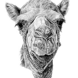 Pencil Paws - Arabian Beauty