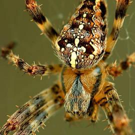 Gene Walls - Arachnophobia