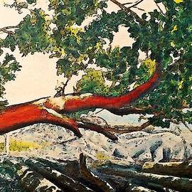Stanley  Funk - Arbutus Over Beach