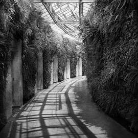 Mike Savad - Architecture - The unchosen path - BW