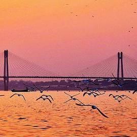 Kim Bemis - Arctic Terns at Sunset on the Ganges - Allahabad India
