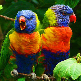 Margaret Saheed - Are You Listening - Rainbow Lorikeets