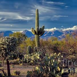 Henry Kowalski - Arizona Desert Landscape