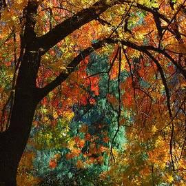 Tam Ryan - Arizona Fall Color