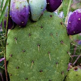 Janice Rae Pariza - Arizona Garden
