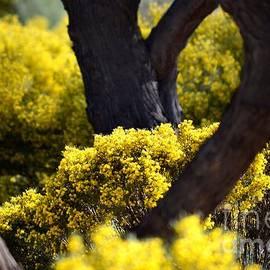 Deb Halloran - Arizona Spring