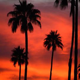 Deb Halloran - Arizona Sunset