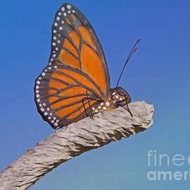 Ann Horn - Artful Butterfly