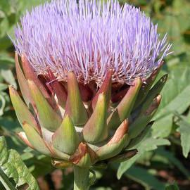 Pema Hou - Artichoke Flower 1