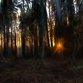 Leif Sohlman - Artistic painterly Sun between trees
