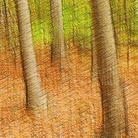 Don Johnson - Artistic Trees #2