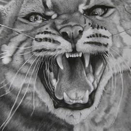 Giorgio  Smiroldo - Asiatic Golden Cat