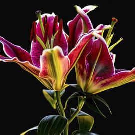 Calazones Flics - Asiatic Lily 2