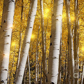 Janice Rae Pariza - Aspen Lights