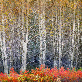 R christopher Vest - Aspens And Autumn Rose And Briar