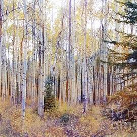 Vickie Emms - Aspens In the Pink