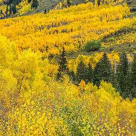 Tim Reaves - Aspens On The Hillside
