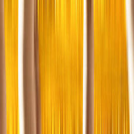 Darren  White - Aspens True Colors