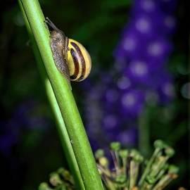 Henry Kowalski - At A Snail