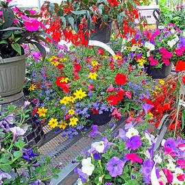 Kay Novy - At The Garden Center