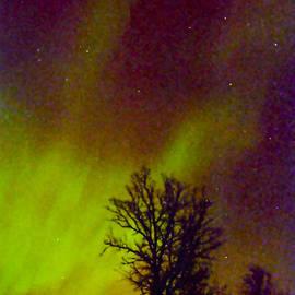 Alex Khomoutov - Aurora Northern Lights