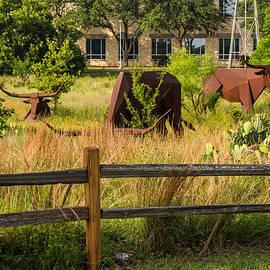 JG Thompson - Austin Texas Longhorn Sculpture