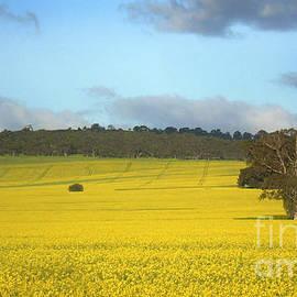 John Wallace - Australian Canola Landscape